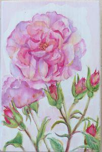 Rosen Prälatengarten